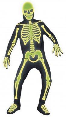 squelette adulte
